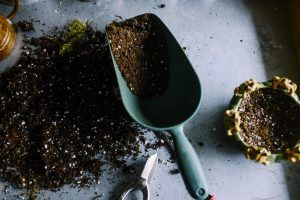 Canva - Gardening Scoop and Soil