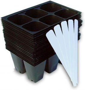 plant starter trays seedlings