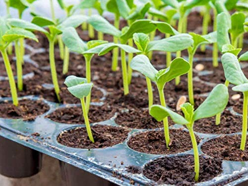 garden-seed-tray
