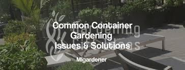 Common gardening issues