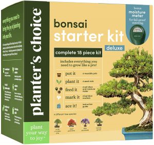 Bonsai Tree Growing Kit - Grow 4 Indoor Bonsai Trees - Plant a Garden from Seeds